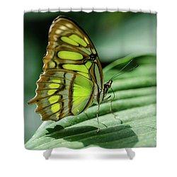 Miss Green Shower Curtain