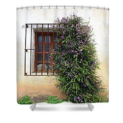 Mission Window With Purple Flowers Shower Curtain by Carol Groenen