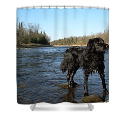 Shower Curtain featuring the photograph Mississippi River Dog On The Rocks by Kent Lorentzen