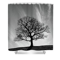 Missouri Treescape Shower Curtain by Christopher McKenzie