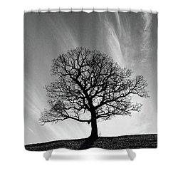 Missouri Treescape Shower Curtain