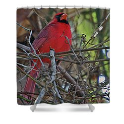 Mister Cardinal Shower Curtain by DigiArt Diaries by Vicky B Fuller