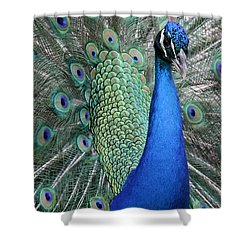 Mister Peacock Shower Curtain