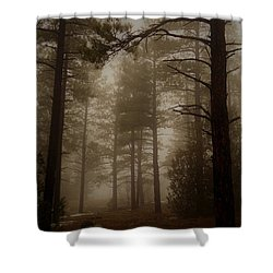 Shower Curtain featuring the photograph Misty Forest Morning by Broderick Delaney