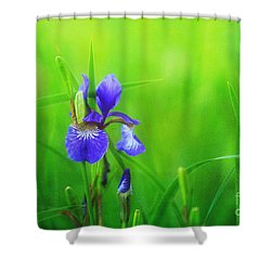 Misty Iris Shower Curtain