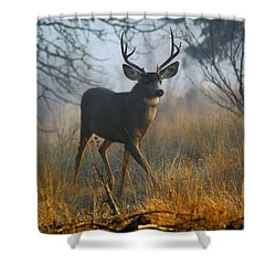 Misty Morning Buck Shower Curtain by Ben Upham III