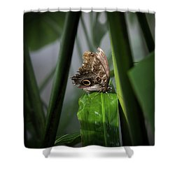 Shower Curtain featuring the photograph Misty Morning Owl by Karen Wiles