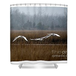 Misty Mute Swans Soaring South Jersey Wetlands Shower Curtain by Diana Wind