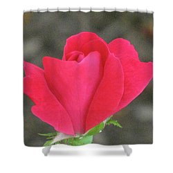Misty Red Rose Shower Curtain
