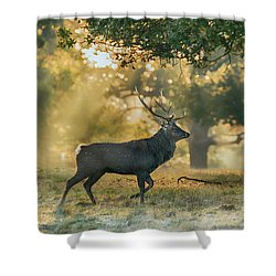 Shower Curtain featuring the photograph Misty Walk by Scott Carruthers
