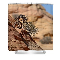 Shower Curtain featuring the photograph Miyagi by David Andersen