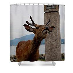 Miyajima Deer Shower Curtain