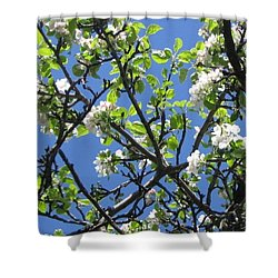 Mn Apple Blossoms Shower Curtain by Barbara Yearty