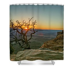 Moab Tree Shower Curtain