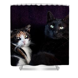 Shower Curtain featuring the photograph Mochi And Stinky by Laura Melis
