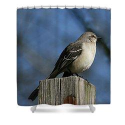 Mocking Bird Shower Curtain