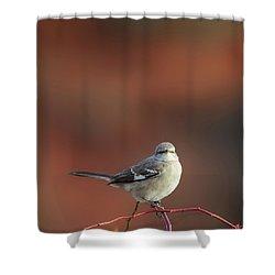 Mocking Bird Morning Square Shower Curtain