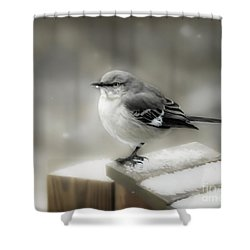 Shower Curtain featuring the photograph Mockingbird by Brenda Bostic