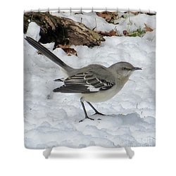 Mockingbird In The Snow Shower Curtain