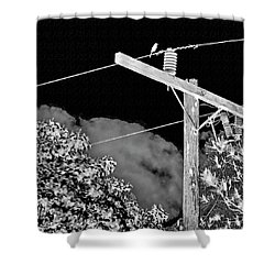 Mockingbird On A Wire Shower Curtain