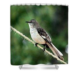 Mockingbird On Rope Shower Curtain