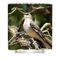 Shower Curtain featuring the photograph Mockingbird  by Sheila Brown