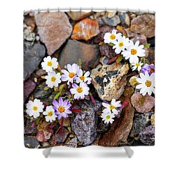 Mojave Desertstar Shower Curtain by Michele Penner