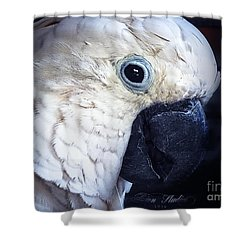 Moluccan Cockatoo Shower Curtain by Melissa Messick