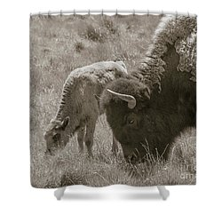 Shower Curtain featuring the photograph Mom And Baby Buffalo by Rebecca Margraf