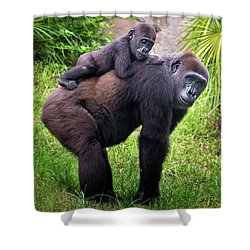 Mom And Baby Gorilla Shower Curtain by Stephanie Hayes