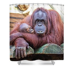 Mom And Baby Orangutan Shower Curtain by Stephanie Hayes