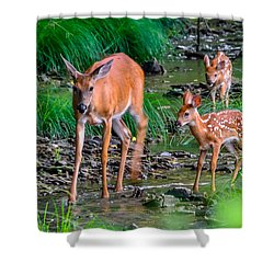 Mom And Fawns 2 Shower Curtain