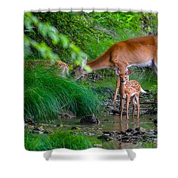 Mom And Fawns 3 Shower Curtain