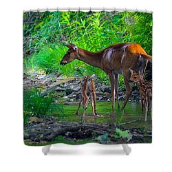 Mom And Fawns Shower Curtain