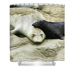 Shower Curtain featuring the photograph Mom And Pup by Anthony Jones