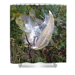 Moment In The Life Of A Milkweed Shower Curtain