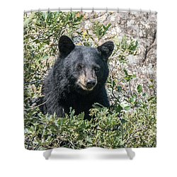 Momma Black Bear Eating Berries Shower Curtain