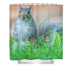 Momma Squirrel Shower Curtain