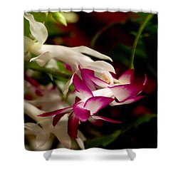 Momma's Christmas Cactus Shower Curtain by B Wayne Mullins