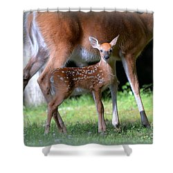 Mommy And Me Shower Curtain by Brenda Bostic