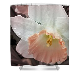 Mom's Birthday Daffodil Shower Curtain