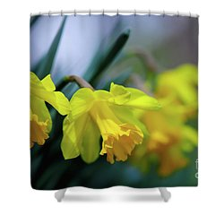 Shower Curtain featuring the photograph Mom's Daffs by Lois Bryan