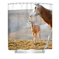 Mom's Supervision Shower Curtain by Arik Baltinester
