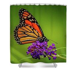 Monarch #1 Shower Curtain