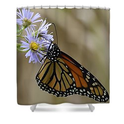 Monarch 2015 Shower Curtain by Randy Bodkins