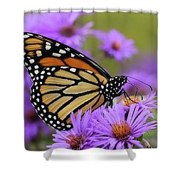Monarch Among The Asters Shower Curtain