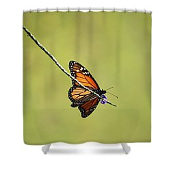 Monarch And Natural Green Canvas Shower Curtain by Carol Groenen
