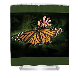 Monarch Butterfly On Lantana Shower Curtain