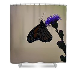 Shower Curtain featuring the photograph Monarch Beauty by Ramona Whiteaker