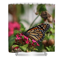 Monarch Butterfly On Fuchsia Shower Curtain